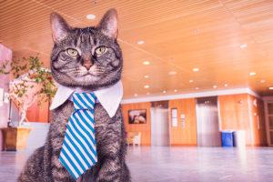 agencies & agents cat